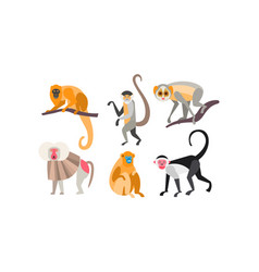 collection monkeys different breeds vector image