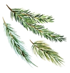 Fir-tree branch vector image