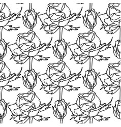 Graphic pattern of roses vector