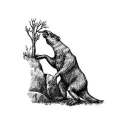 ground sloth or megatheriidae prehistoric mammals vector image