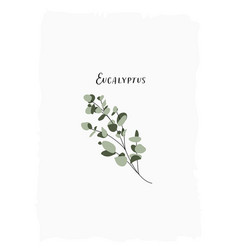 hand drawn delicate stylish flat botanical vector image