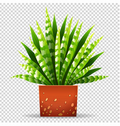 plant in pot on transparent background vector image