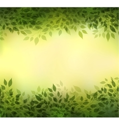 Branches and leaves vector image