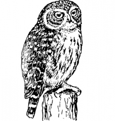 horned owl vector image vector image