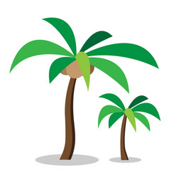two coconut trees with coconut vector image vector image