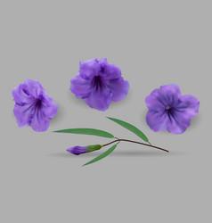 cracker plant purple vector image