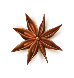 Realistic dried anise star with pits vector