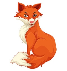 Red fox sitting alone vector image