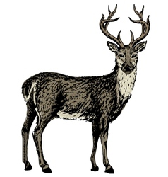 sketch of reindeer vector image