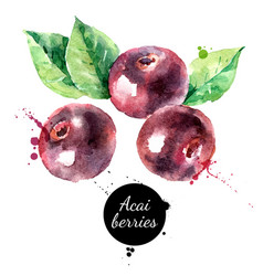 Watercolor hand drawn acai berry painted sketch vector