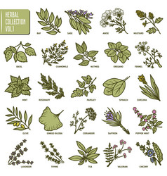 hand drawn set of herbs and spices vintage vector image vector image