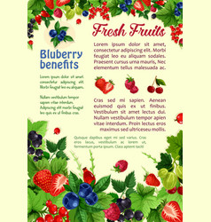 fresh berries and fruits poster vector image