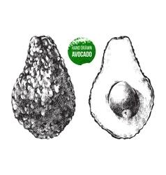 Hand drawn avocado vector image vector image
