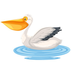 A pelican on white background vector