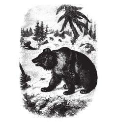 European bear vintage vector