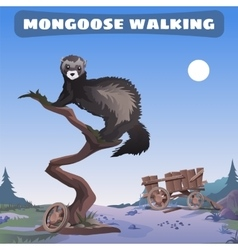 mongoose walking through the wild West vector image