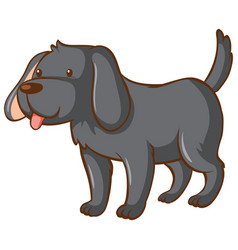 one gray dog on white background vector image