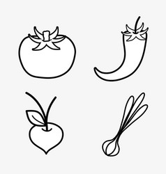 Tomato chilli garlic and onion vegetable vector