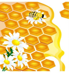 design of honeycomb and flowers vector image