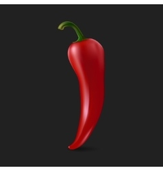 Red chilli pepper vector