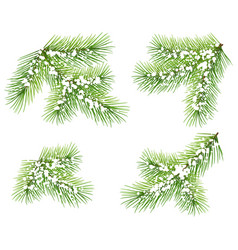 set green pine branch isolated on white fir vector image