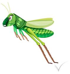 A green grasshopper on white background vector