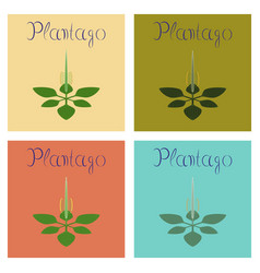 Assembly flat healthy plant plantago vector
