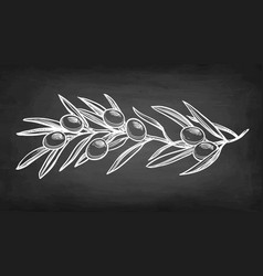 chalk sketch of olive branch vector image
