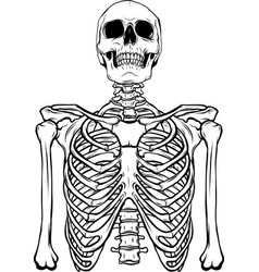 draw in black and white human skeleton on white vector image