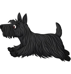 Scottish terrier dog breed running vector