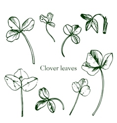 Set of ink drawing clover leaves vector