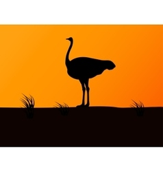 silhouette ostrich on background of sunset vector image