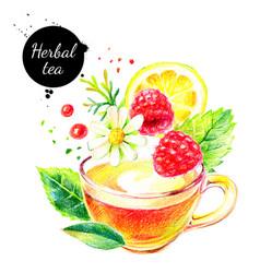 watercolor color pencil hand drawn herbal tea vector image