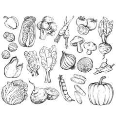 collection of hand-drawn vegetables black and vector image