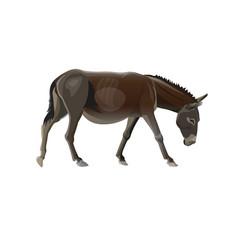 Donkey goes vector