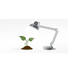 lamp and sprout vector image