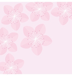 Sakura flowers Japan blooming cherry blossom vector image