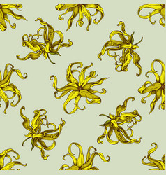 seamless pattern with hand drawn colored ylang vector image