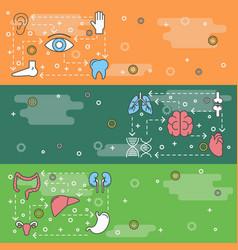 thin line art human organs web banner vector image