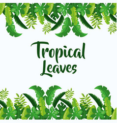 Tropical leaves decoration vector