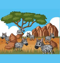 Zebras in savanna field vector