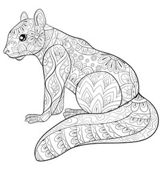 Adult coloring bookpage a cute squirrel image for vector