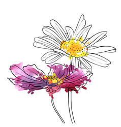 Drawing flowers of daisy vector
