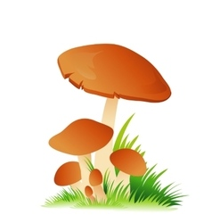 Edible mushroom porcini with grass on white vector