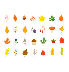 flat autumn forest elements leaves berries icons vector image
