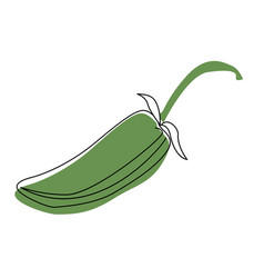 Jalapeno hand drawn isolated on vector
