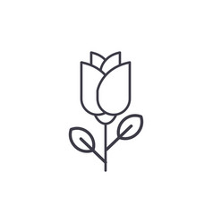 one rose line icon concept one rose flat vector image