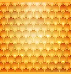 stock realistic honeycomb vector image