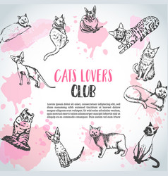 Background with cat breeds cats lovers club vector