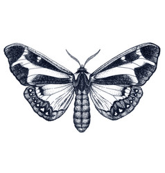 beautiful butterfly tattoo dotwork tattoo vector image
